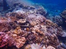 Глубокое море и коралловый риф, красочные кораллы в ландшафте океана Стоковые Фотографии RF