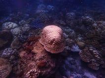 Глубокое море и коралловый риф, красочные кораллы в ландшафте океана Стоковое фото RF