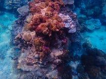 Глубокое море и коралловый риф, красочные кораллы в ландшафте океана Стоковые Фото
