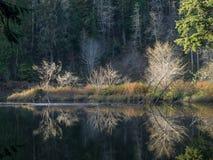 глубокое озеро пущи Стоковые Изображения RF