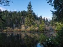 глубокое озеро пущи Стоковые Изображения