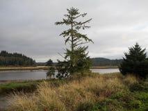 глубокое озеро пущи Стоковое фото RF