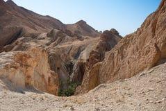 Глубокое ущелье горы с пальмами Стоковые Фотографии RF