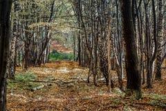 Глубоко в лесе в горах стоковое изображение rf