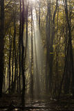 Глубоко в лесе в горах стоковое фото
