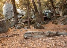 Глубоко в лесистой области 1 Стоковые Изображения