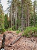 Глубоко в лесистой области 4 Стоковые Фото