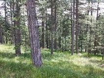Глубоко в лес Стоковое фото RF