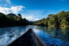 Глубоко в джунглях Амазонки стоковые изображения