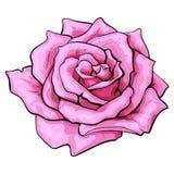 Глубоко - роза пинка, взгляд сверху изолировала иллюстрацию вектора эскиза иллюстрация вектора
