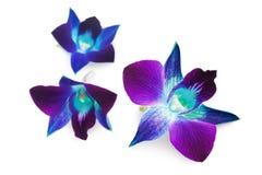 Глубоко - фиолетовая орхидея стоковые изображения rf