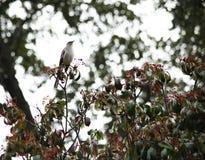 Глумясь птица Стоковые Фото