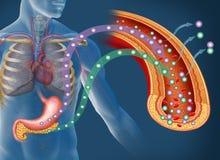 Глюкоза и инсулин в диабете Стоковое Изображение RF