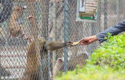 Давать банан Стоковая Фотография RF