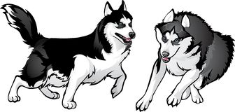 Давать в численном выражении собаки - кто сильне иллюстрация вектора