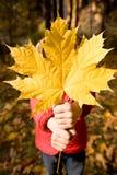 давать клен листьев Стоковые Фотографии RF