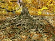 давать корни жизни Стоковая Фотография RF