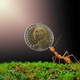 Дайте деньги для муравья стоковая фотография rf