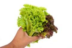дайте салат Стоковое фото RF