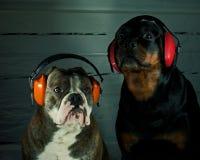 Дайте собакам хорошая Новогодняя ночь Стоковые Фото