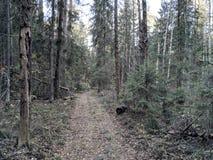 Далеко в лесе стоковое изображение rf
