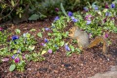 Даллас Arbitorium и ботанический сад в зиме стоковые изображения