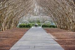 Даллас Arbitorium и ботанический сад в зиме стоковая фотография rf