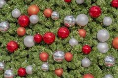 Даллас Arbitorium и ботанический сад в зиме стоковые фотографии rf
