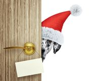 Далматинская собака в красной шляпе Санта Клауса рождества смотря вне вход двери дома с пустой карточкой Изолировано на белизне Стоковые Изображения RF