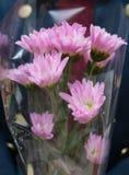 Дама держа пук хризантемы Стоковое Фото