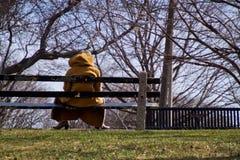 Дама на скамейке в парке в зиме Стоковая Фотография