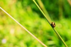 Дама Прослушивать на стержне травы Стоковые Фото