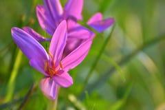 Дама цветка нагая Стоковое фото RF