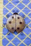 Дама Черепашка Стоковое Фото
