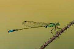 Дамы летают в естественный свет Стоковые Фотографии RF