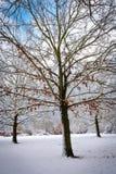 Датская зима - первый снег Стоковая Фотография RF