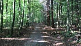 Датская осень леса видеоматериал