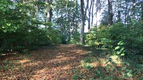 Датская осень леса сток-видео