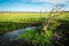Датская трясина и ландшафт озера Стоковое фото RF