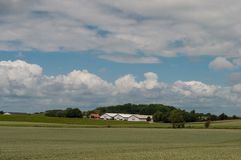 Датские ферма и поля Стоковое Фото
