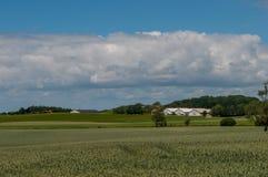 Датские ферма и поля Стоковые Фотографии RF