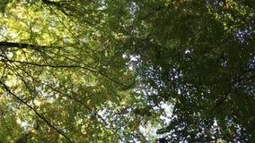 Датский лес в осени видеоматериал