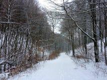 Датское forrest на wintertime Стоковое Изображение RF
