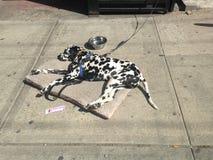 Далматинская собака лежа в улице стоковые фото