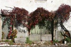двери французские Стоковые Изображения RF