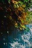 Дверь и листья осени Стоковое Изображение