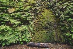 Дверь мха в каньоне папоротника Стоковое Фото