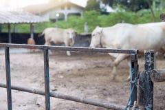 дверь ` s коровы сделана из стали Стоковая Фотография RF