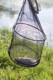 Двигая под углом рыбы с карпом в середине против фона луга и озера стоковое изображение