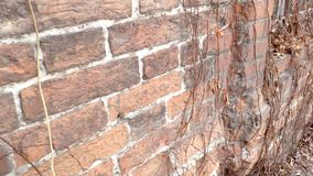 Движение вдоль старой кирпичной стены с окном на котором ржавая решетка и высушенные дикие виноградины видеоматериал
